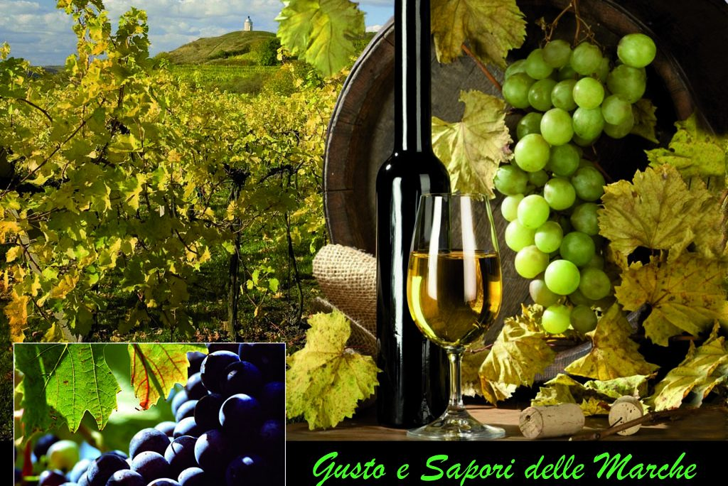 Le Marche regione del vino: i posti dove trovare i vini migliori