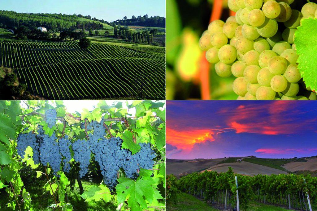 Le Marche i vini tipici e le zone turistiche