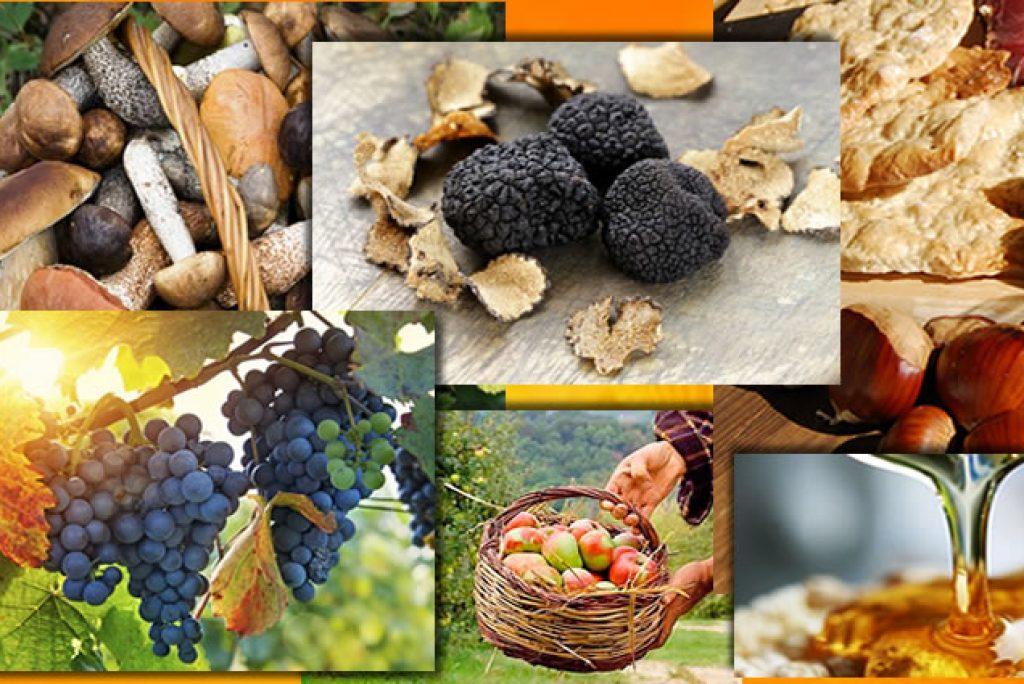L'autunno e le sue specialità, scopri le sagre di ottobre nelle Marche.