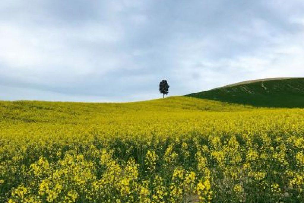 10 foto della primavera nelle Marche