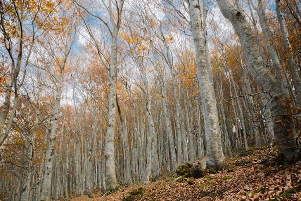 Le migliori foto dell'autunno nelle Marche