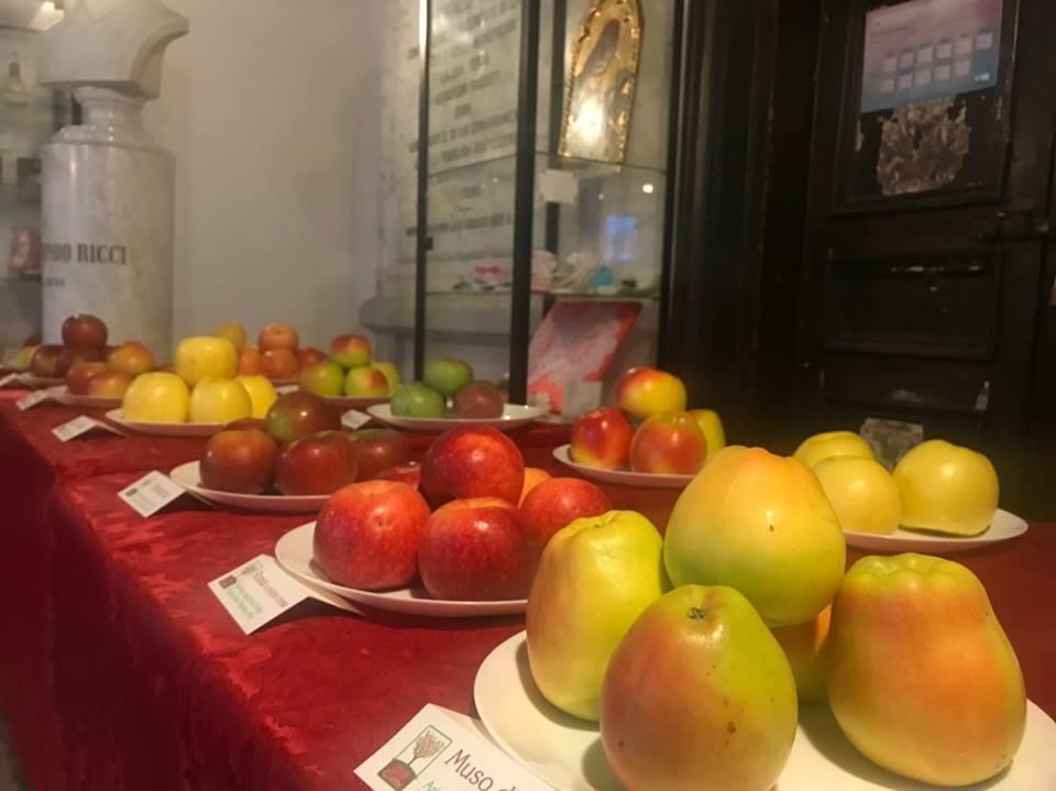 Saperi e Sapori della Mela Rosa 2018 – Monte San Martino (MC)