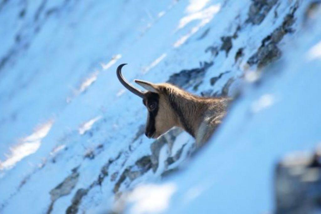 Quali animali vivono nei Monti Sibillini?