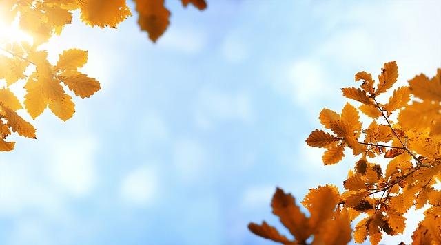 autumn-4034180_640