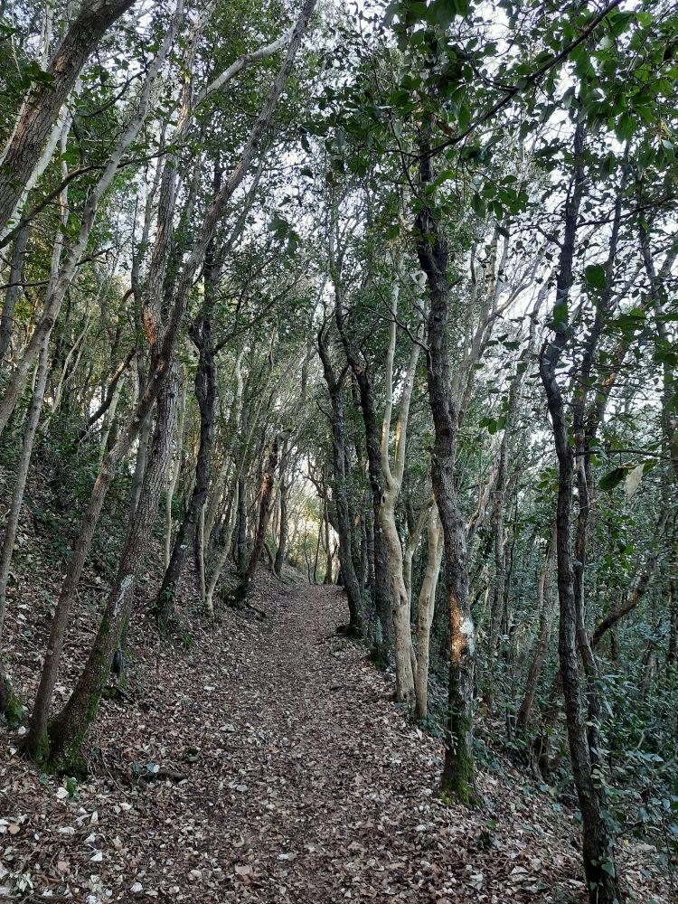 Nelle Marche le atmosfere incantate di antichi sentieri