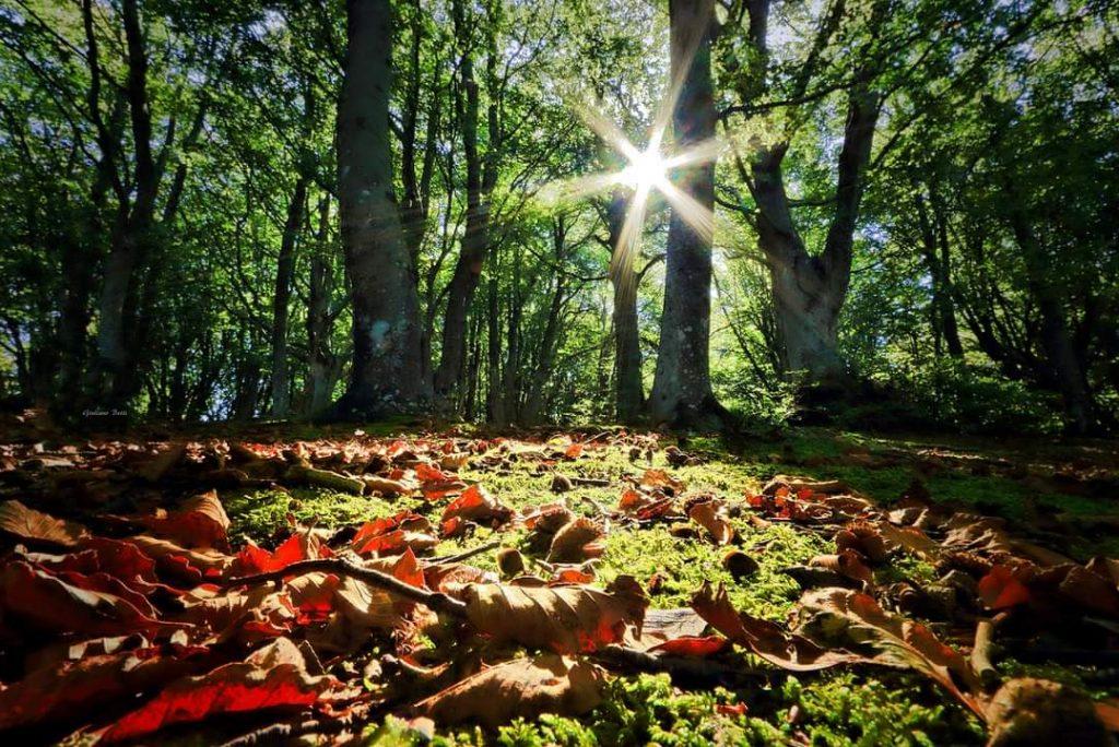 il Foliage nelle Marche, 3 escursioni da non perdere
