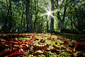 Il foliage nelle Marche